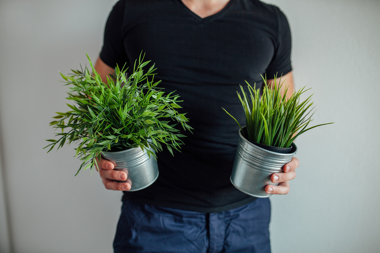 Selon La Nasa  Des Plantes Purifient Mieux L U0026 39 Air De Votre